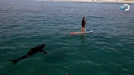 Faire du stand up paddle avec un gros requin blanc !