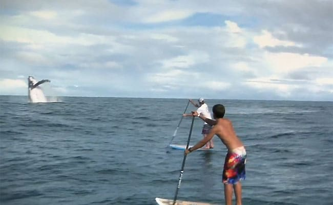 Superbe trip stand up paddle en Colombie