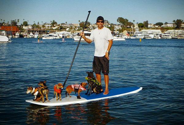 Le stand up paddle et les chiens !