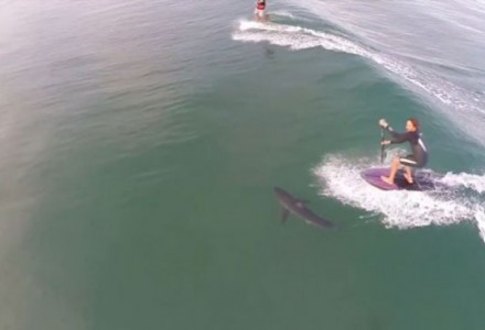 stand-up-paddle-vague-requin-drone