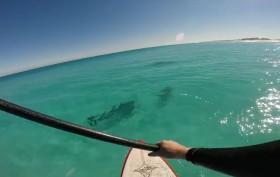 Pratiquer le stand up paddle avec des dauphins