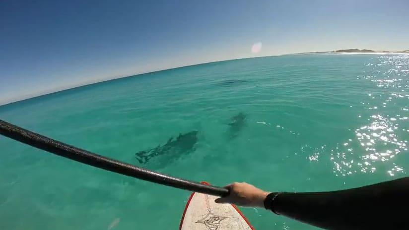 Pratiquer le stand up paddle en compagnie de dauphins