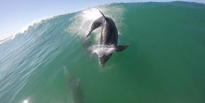 Vidéo d'une collision entre un dauphin et un stand up paddle !