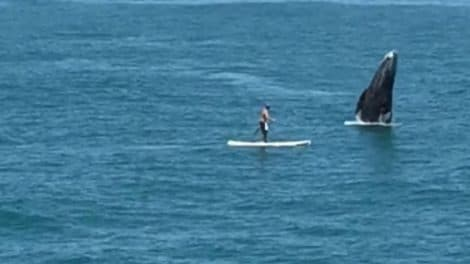 Surpris par une baleine en stand up paddle