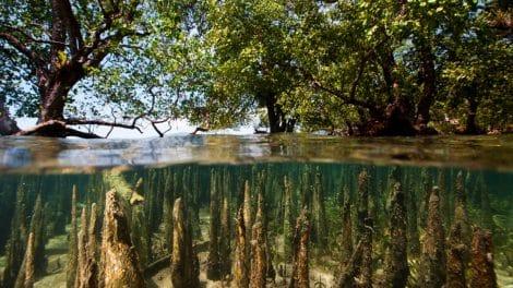 Expédition stand up paddle dans la mangrove birmane avec WaterTrek