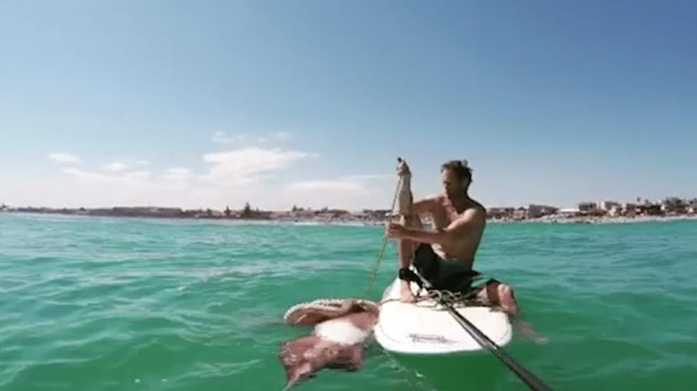 Un énorme calamar se hisse sur son stand up paddle