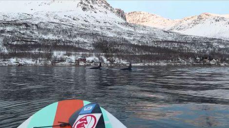 Vidéo stand up paddle au milieu des orques en Norvège