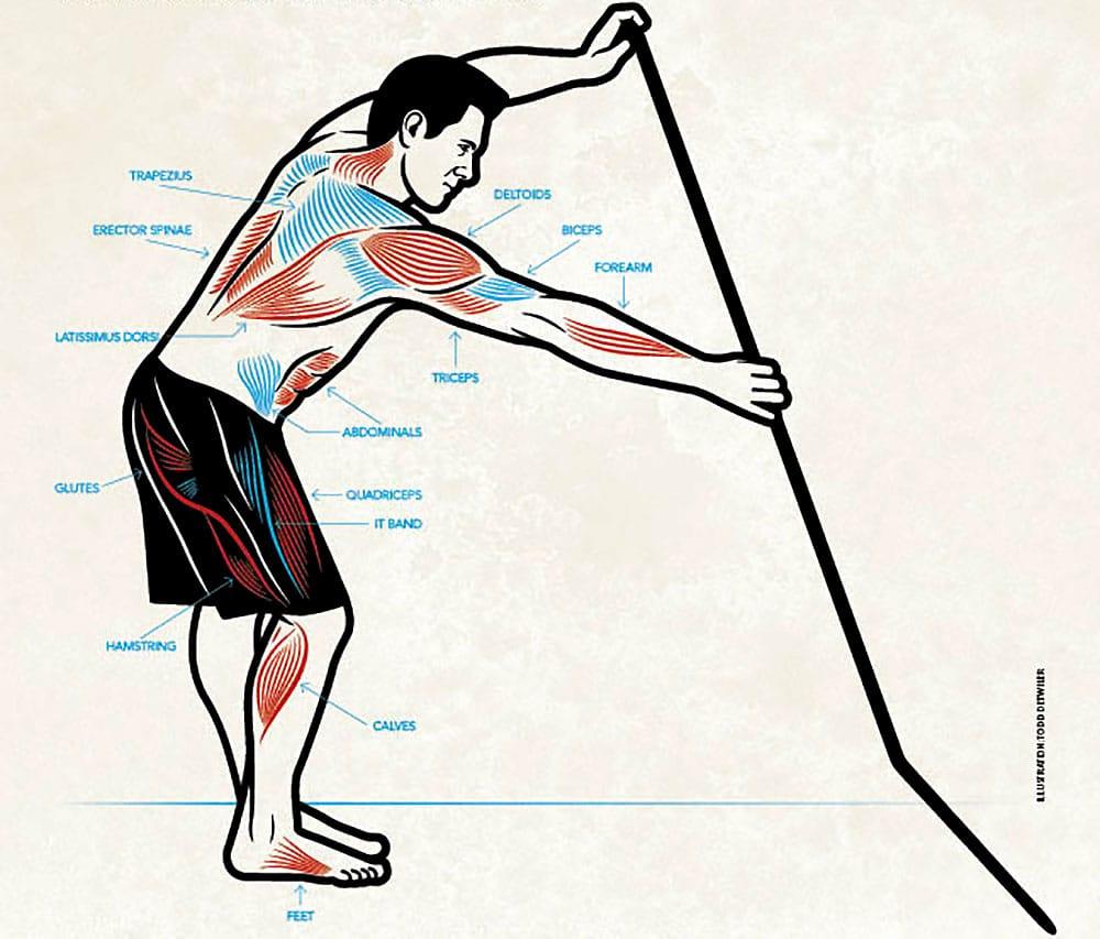 Les muscles utilisés en pagayant en stand up paddle