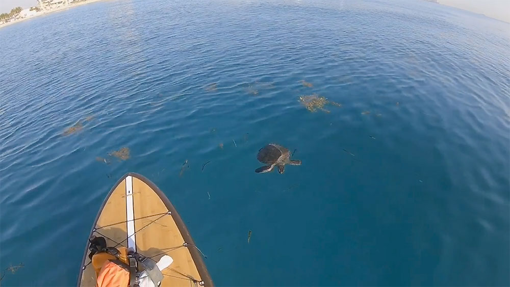 Vidéo stand up paddle avec la faune marine à Hollywood