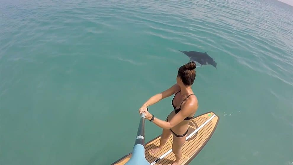 Vidéo stand up paddle avec la faune marine à Hollywood
