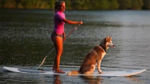 Votre chien sur un stand up paddle