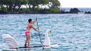 Animaux gonflables sur votre paddle